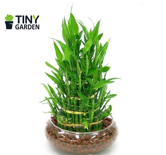 Tư vấn cách trồng cây phong thủy trong văn phòng, nhà ở