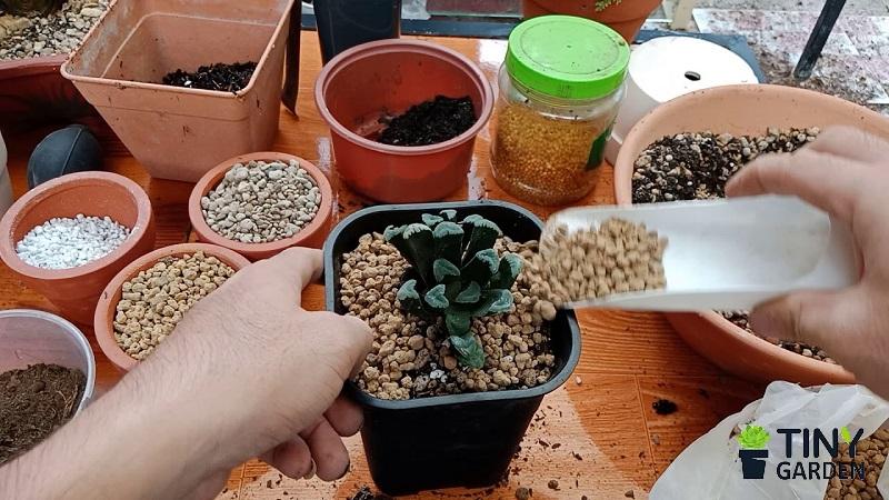 Trộn đất trồng xương rồng