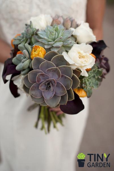 Hoa sen đá cô dâu