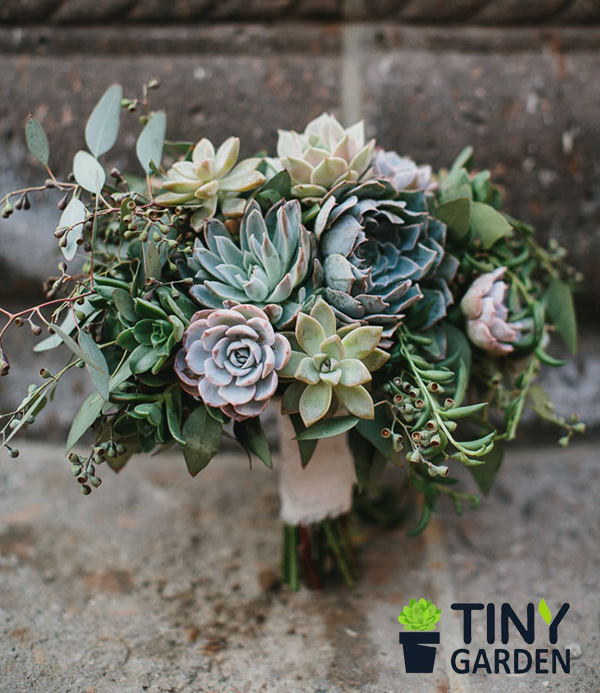 Hoa cưới sen đá