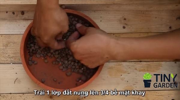 Trải đất 3/4 chậu dưới