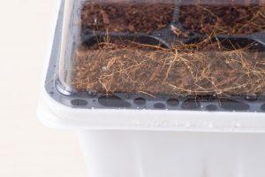 Đậy nắp hộp giữ ẩm cho đất